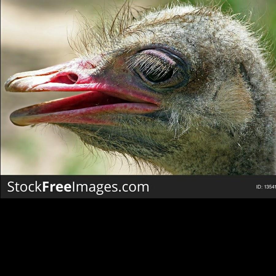 OstrichBird39 Multiple Subjects